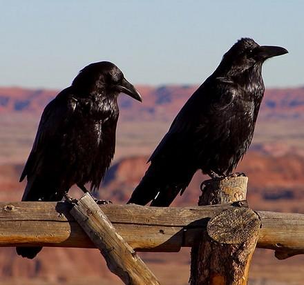 ravens_demonstr.jpg